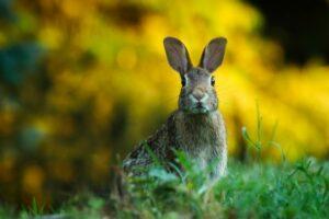 rabbit-wire-mesh-netting
