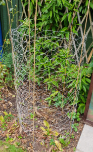 How to Make Tomato Cages with Chicken Wire