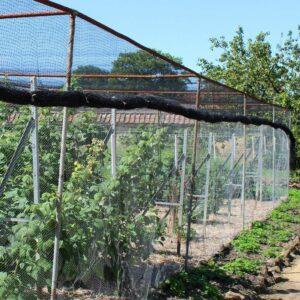 fruit-cage-netting