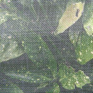 insect-netting