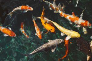 fish-pond-netting