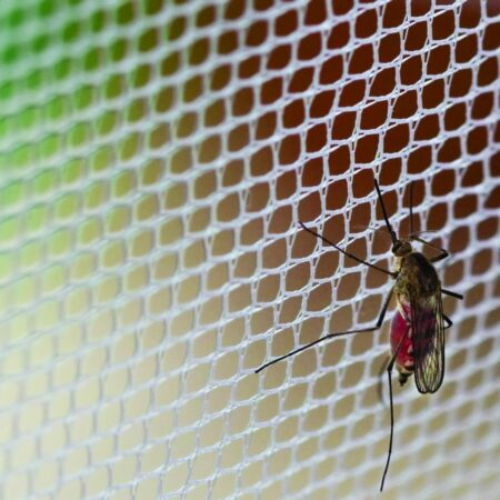 Fly Screens