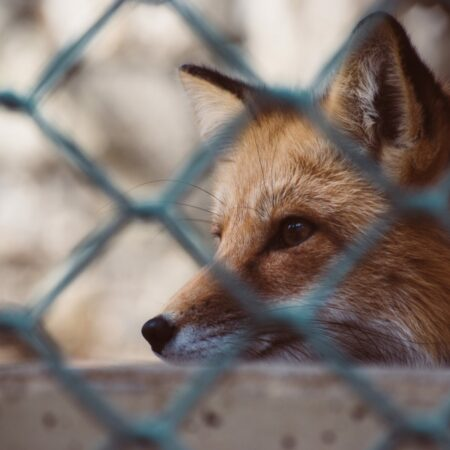Fox Proof Fencing