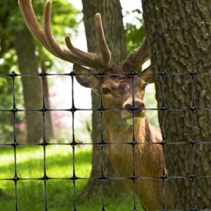 deer-fence-black-plastic