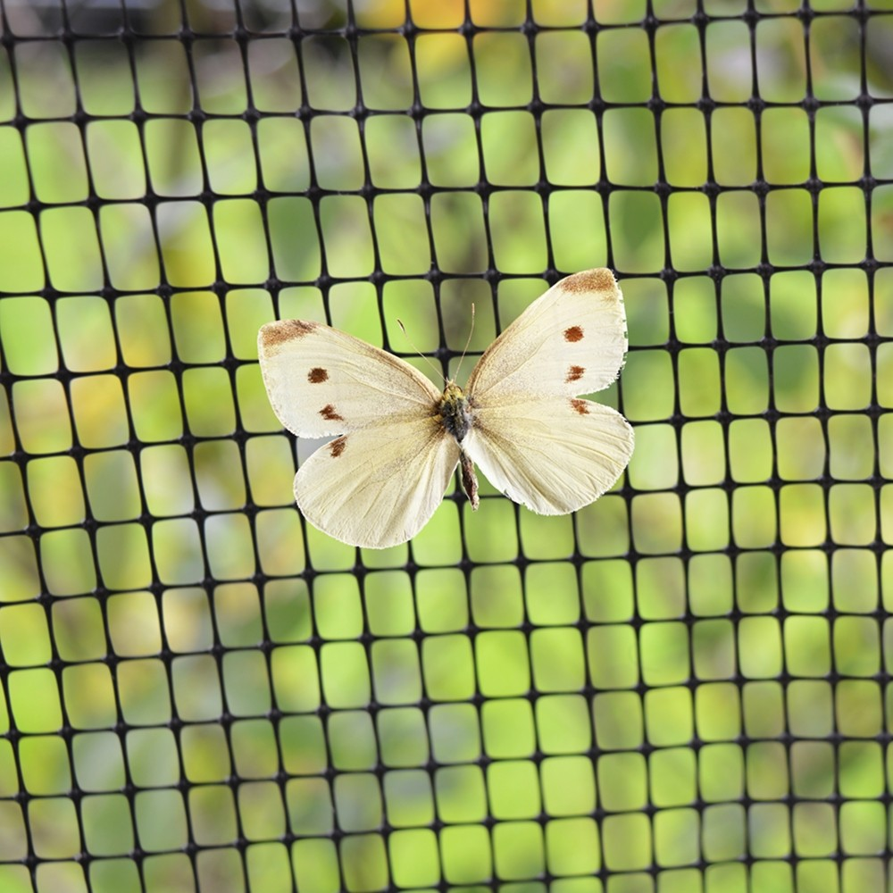 butterfly-on-netting