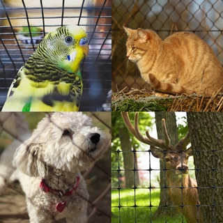 Animal & Pet Fencing