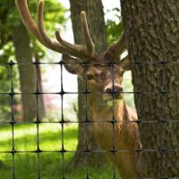 Plastic Deer Fencing