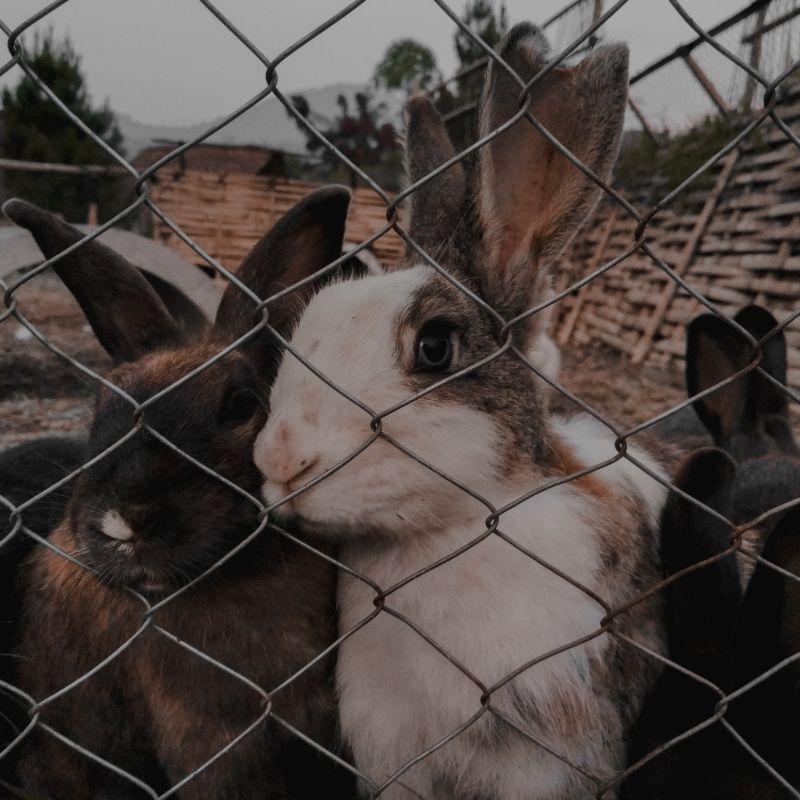 Rabbit Fencing