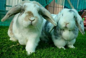 Fundraising: A bunny with a long journey ahead!