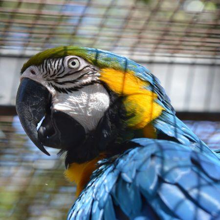 Parrot Aviary