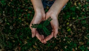 On 30th November, Wire Fence Will Donate 100% of its Profit for National Tree Week