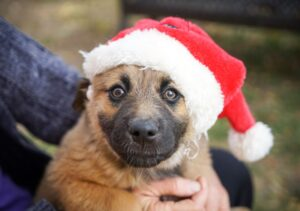 On 18th December, Wire Fence Will Donate 100% of its Profit to a Dog Rescue Centre