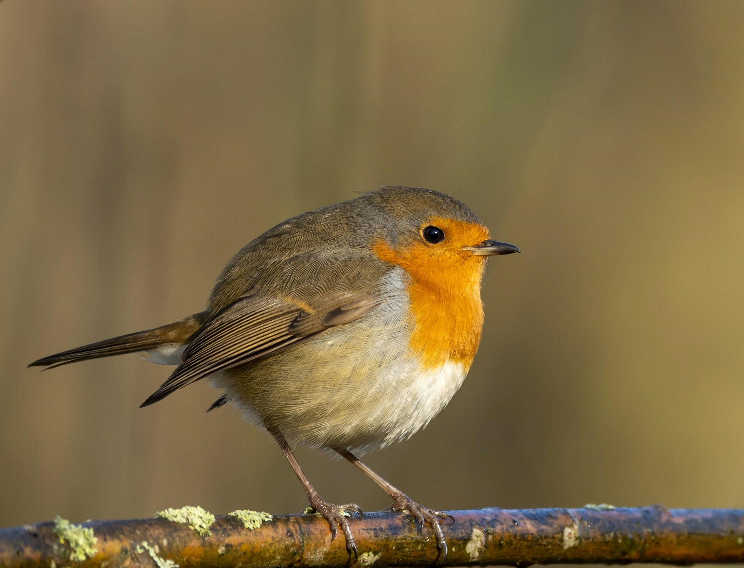 On 31st January, Wire Fence Will Donate 100% of its Profit for Big Garden Birdwatch Weekend