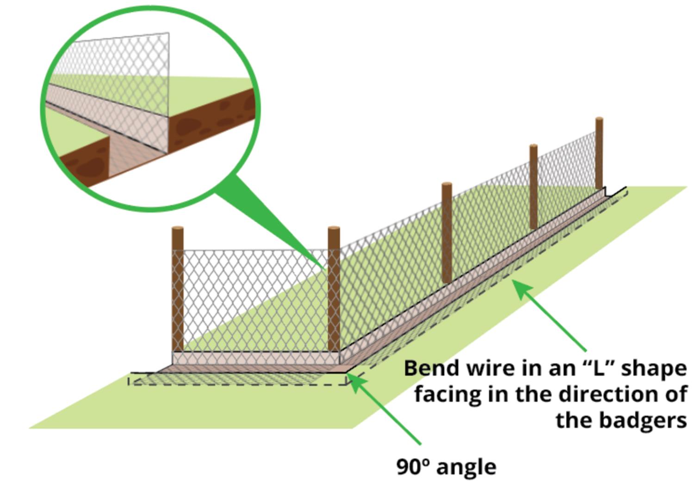 fence-overlap-for-badger-proof-fence