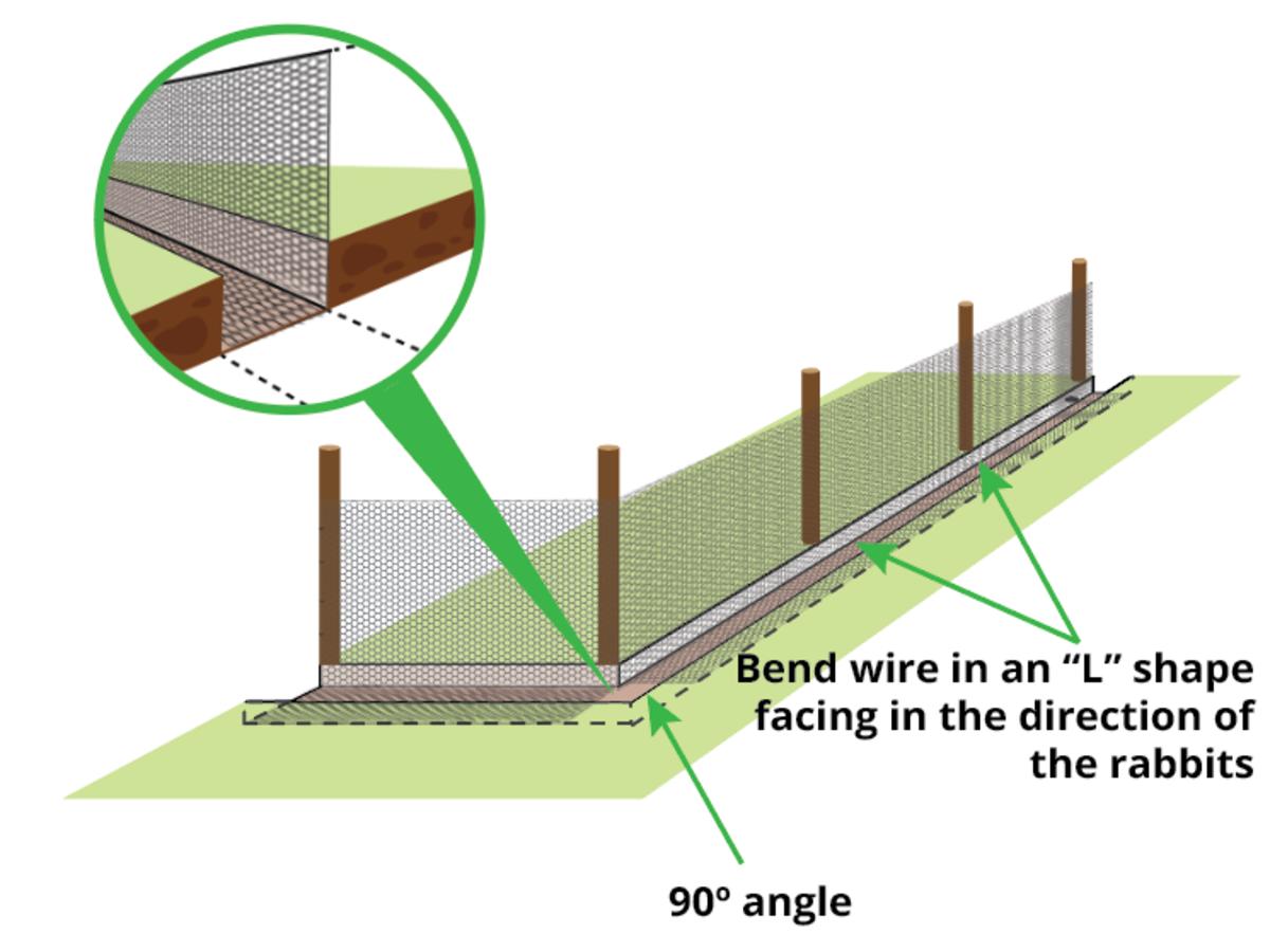 rabbit-proof-fence-overlap