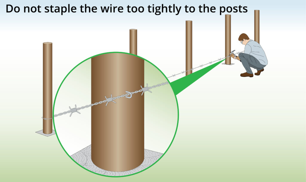 staple-barbed-wire-to-posts
