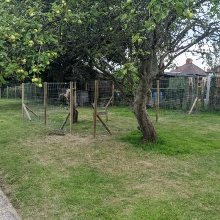 Dog Fence for Outdoors