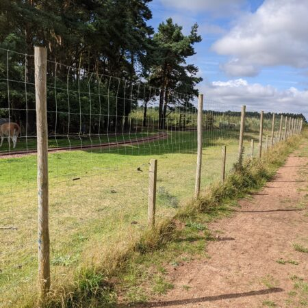 Dog Fencing for Large Areas